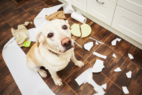 Causes of Canine Territorial Behavior